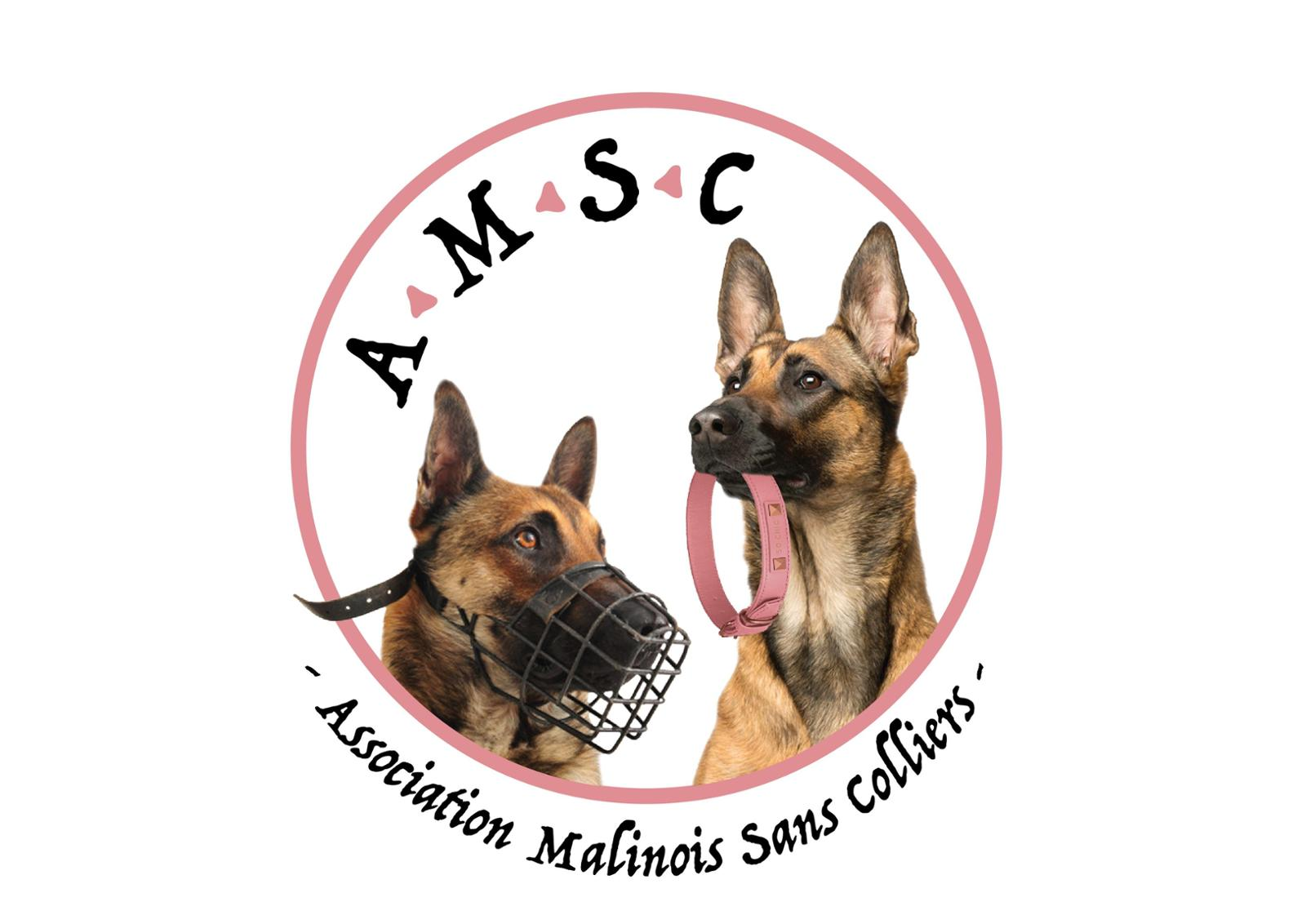 Association Malinois Sans Colliers - A.M.S.C