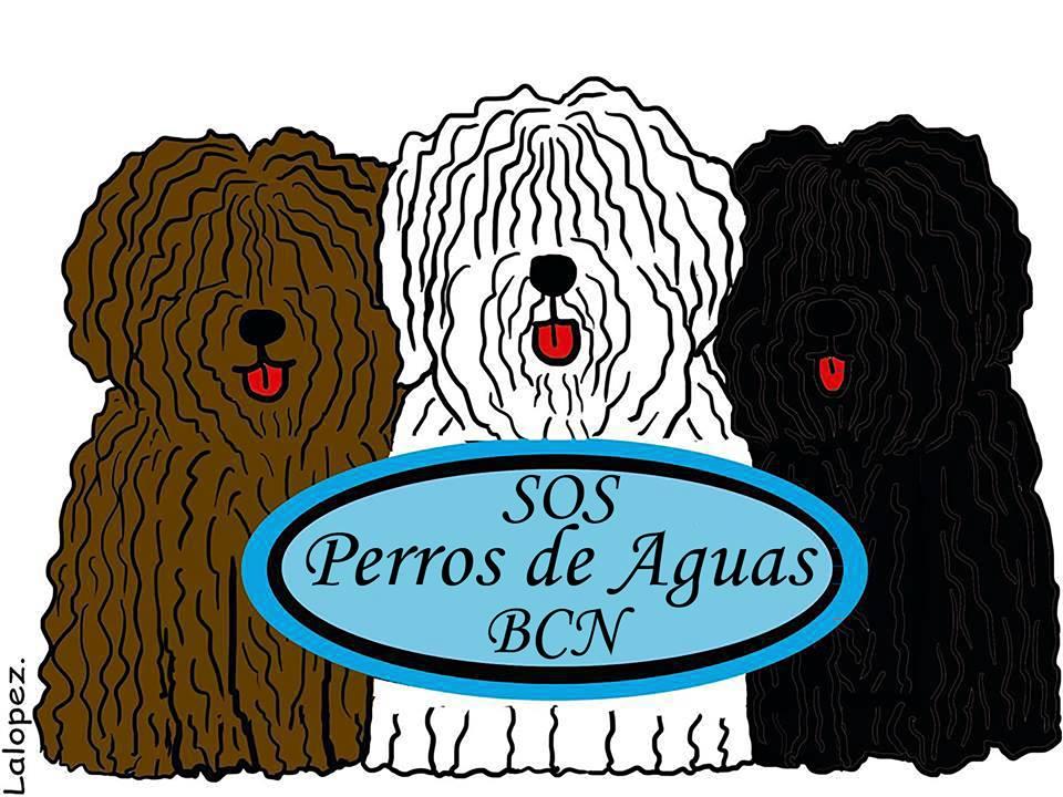 SOS PERROS DE AGUAS BCN