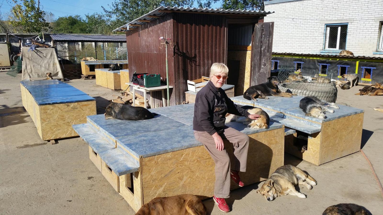 Friends of SOS KIEV ANIMAL SHELTER, Help Tamara & 1300 animals, Ukraine