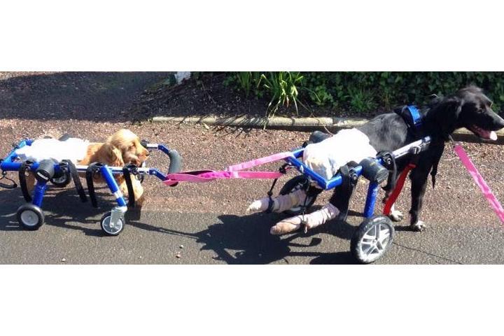 Suzi Handicap Animal