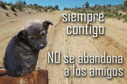 SOS Animales Accion