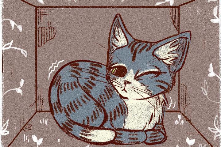 AACC Santuario de gatos