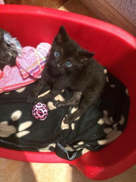 Helping Kitten Paws