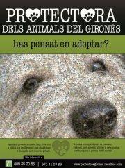Ong Protectors dels animals del Gironès