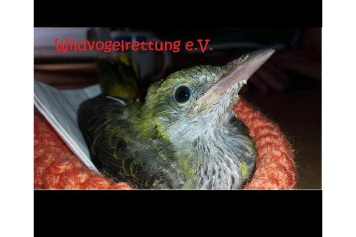 Wildvogelrettung e.V