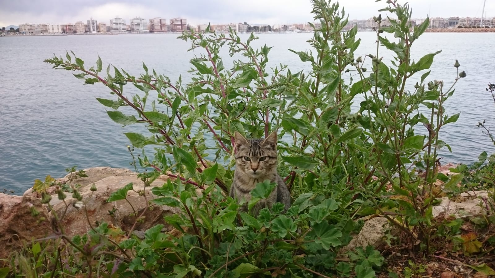 Cat's Colonies Torrevieja- veterinary payments