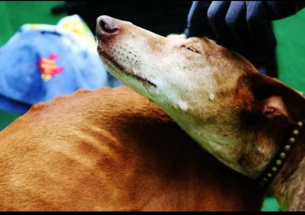 ADEMAL Lanzarote - Asociación para la Defensa y contra el Maltrato animal