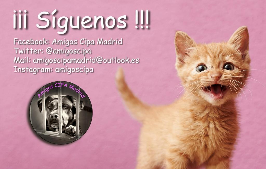 Amigos CIPA Madrid