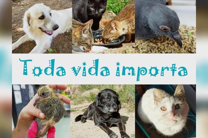 Proyecto Feel & Help