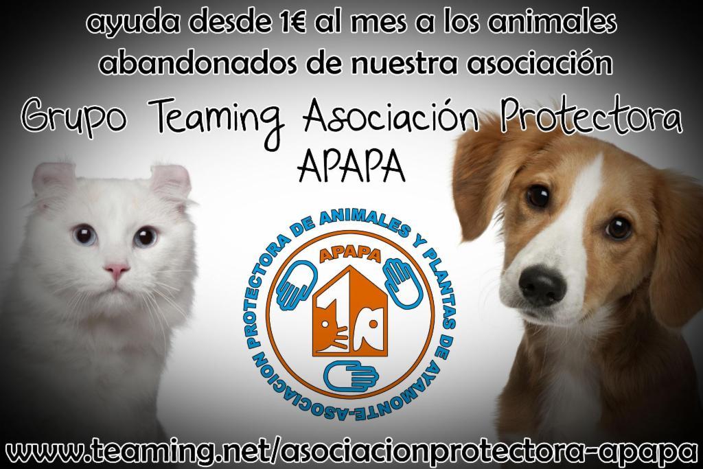 Asociación Protectora (APAPA)