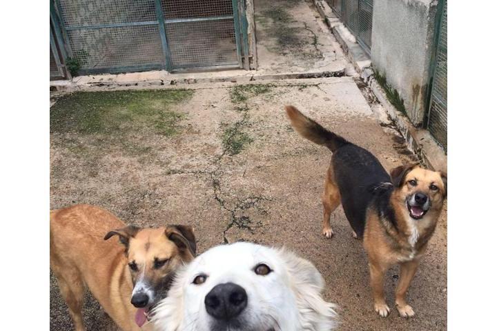 Sostieni i 60 cani del Rifugio Eureka Palermo