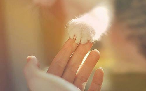 Kittens In Distress Charity - Alicante, Spain