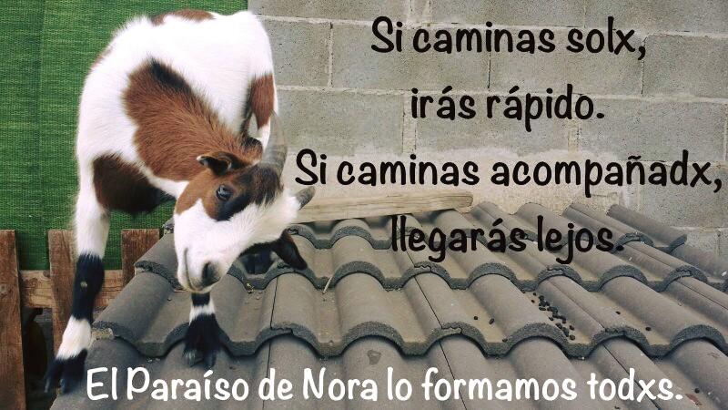 EL PARAISO DE NORA ( Hogar Antiespecista)