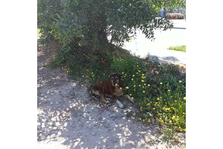 Aide pour chats et chiens errants Casablanca