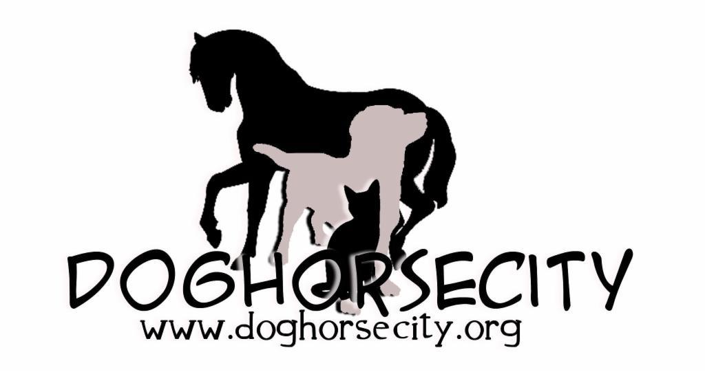 Dog Horse City A.P.A.P.