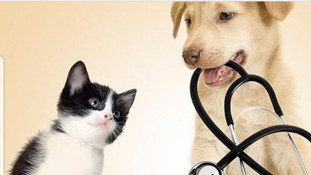 Help for animals