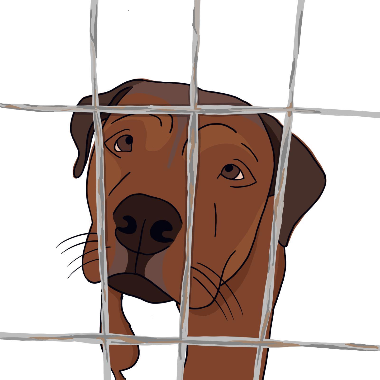 Adopta In-visibles, ayúdanos a salvar vidas de la Perrera de Almería