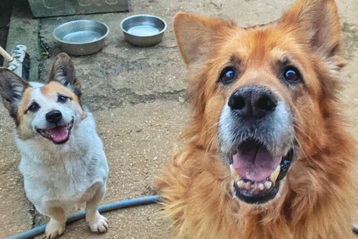 Ayuda para los perritos ancianos abandonados