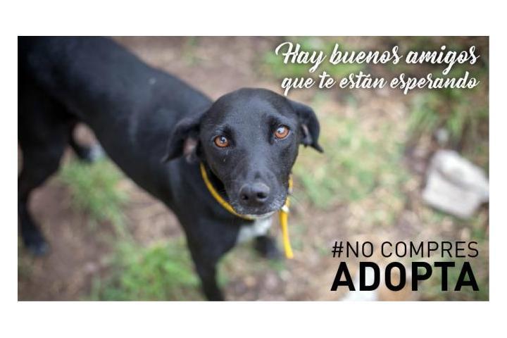 AEAE/Asociación Pro Derechos de los Animales