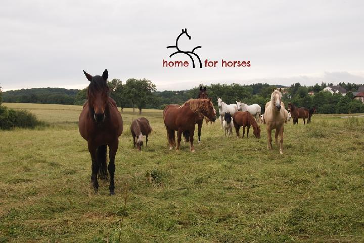 home for horses e.V.