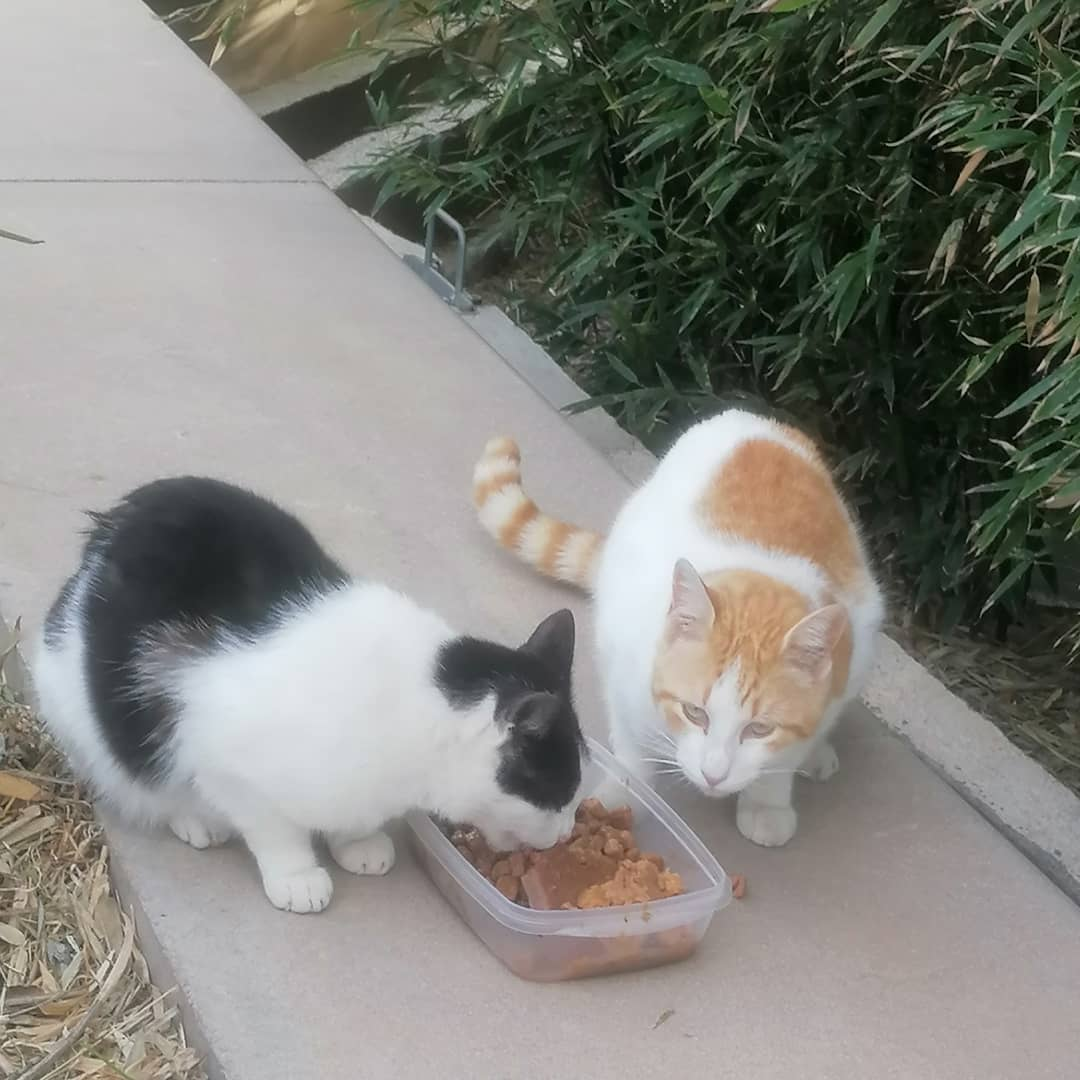 Gatos Parque Central Valencia