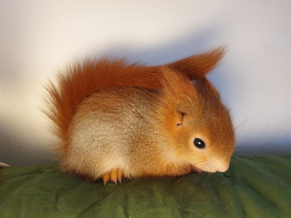 Squirrel Protection