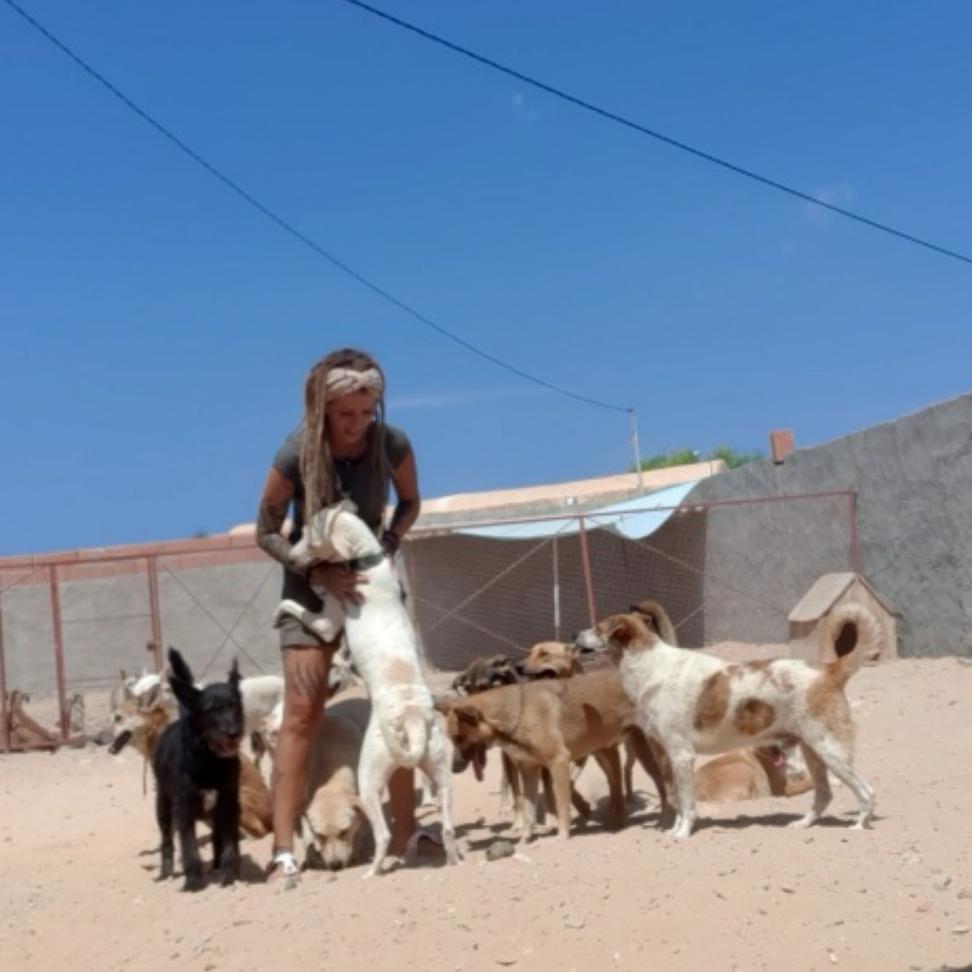 Tierschutz Tunesien - Dar Amdouni