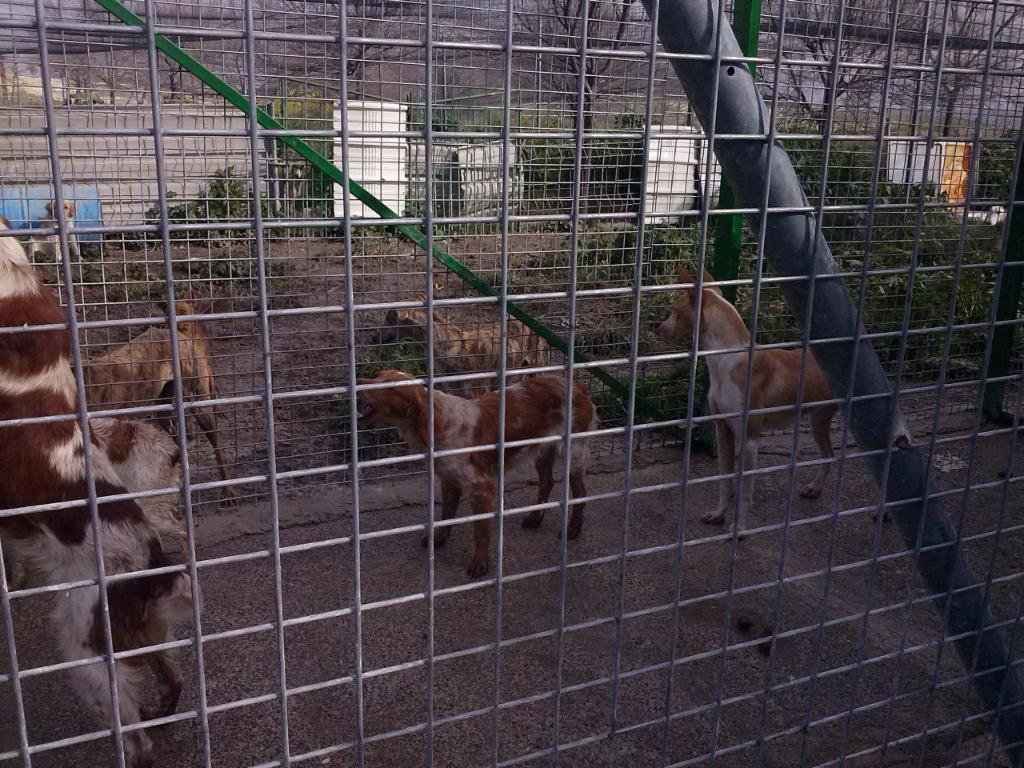 Animales sin hogar de Baena