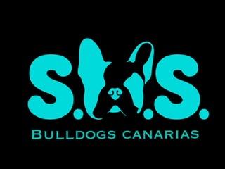 sos Bulldogs Canarias