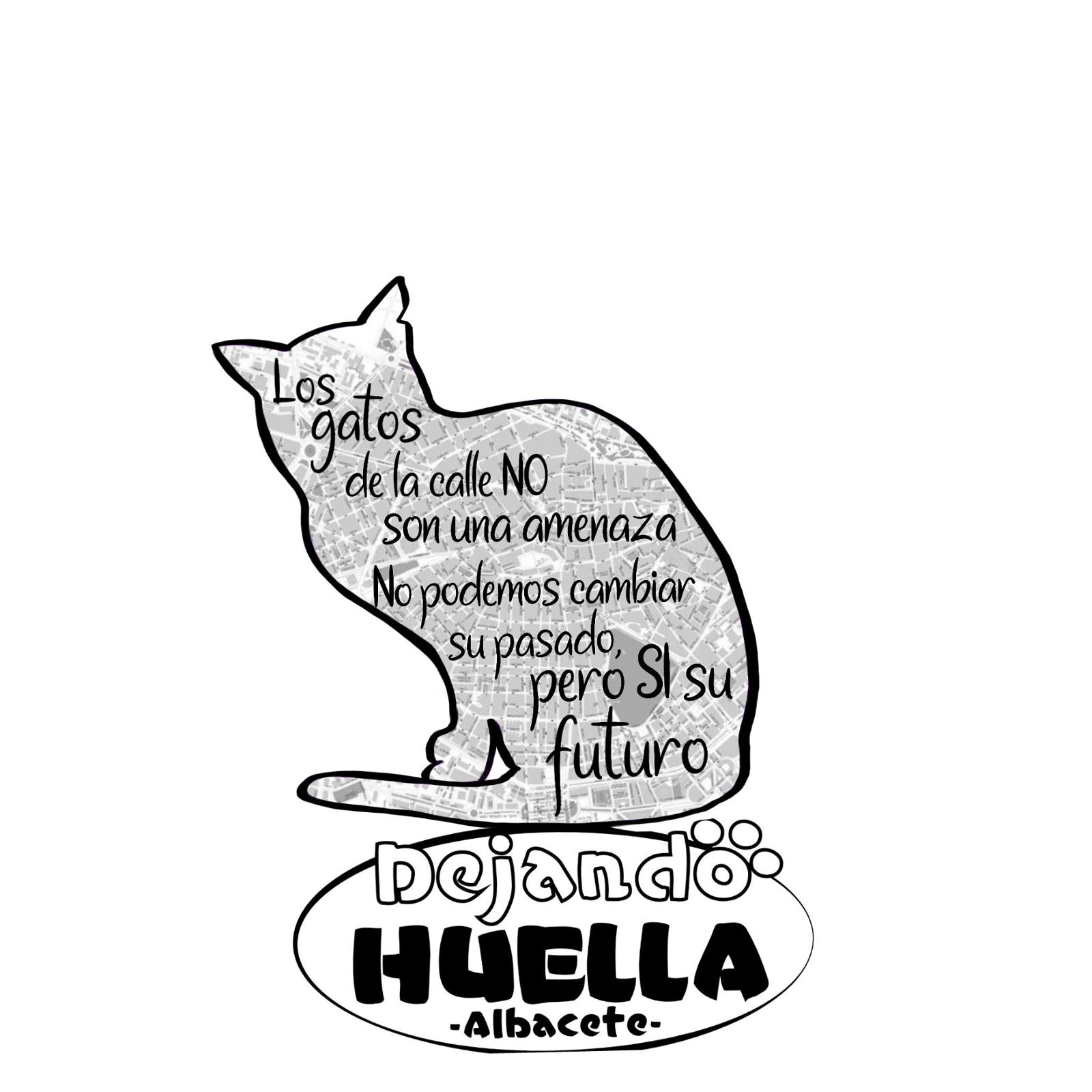Colonias Felinas Dejando Huella Albacete