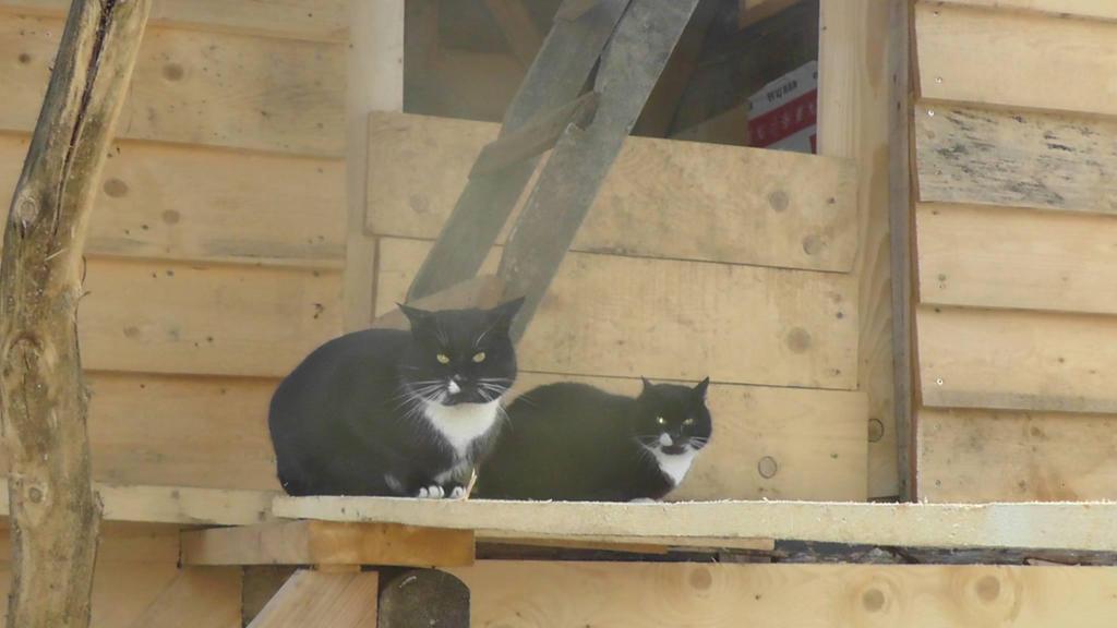 Cat Shelter Targu Mures, Romania