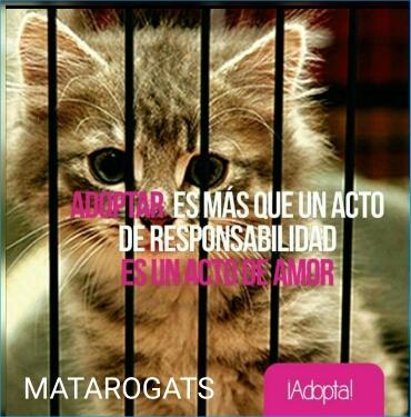 Mataró gats