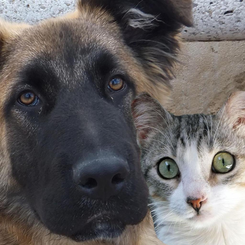 MODEPRAN. Protectora de Animales de Valencia