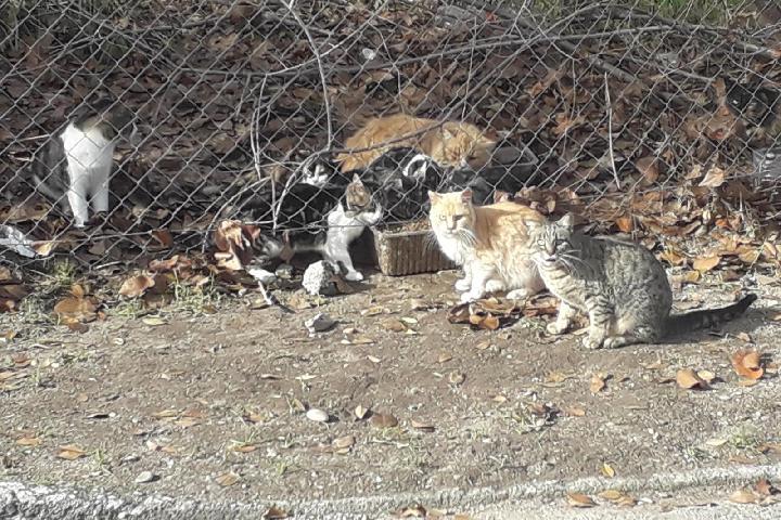 Gatos callejeros de Nuria en Colmenar de Oreja