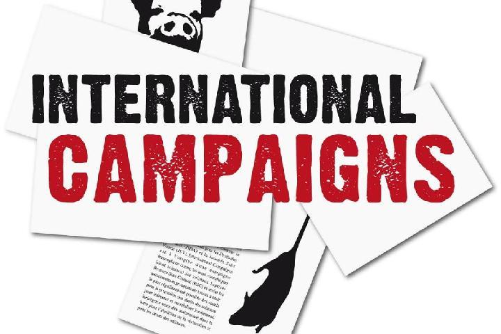 International Campaigns