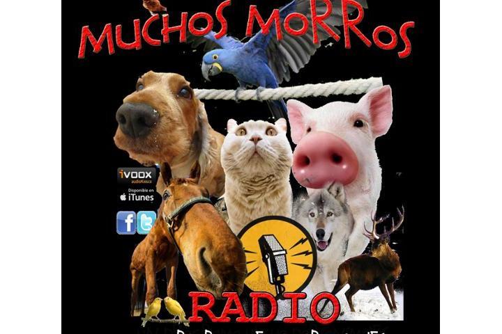 Cinco Hocicos-Muchos Morros Radio