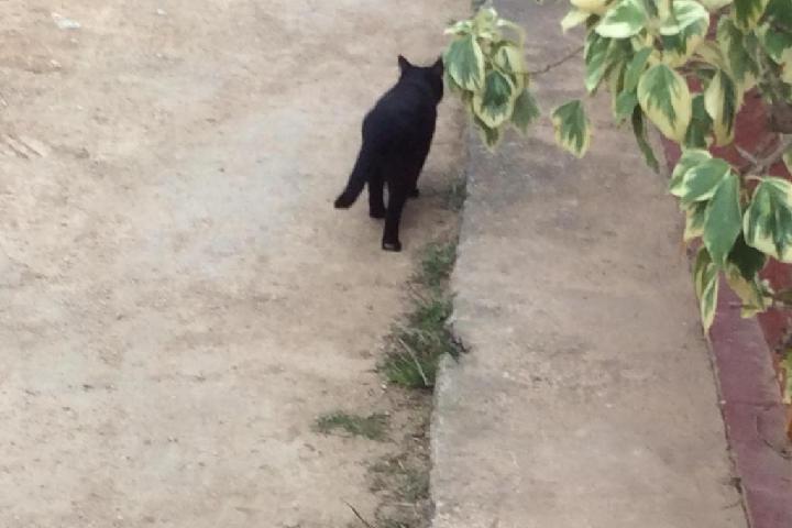 El cobijo del gato solitario