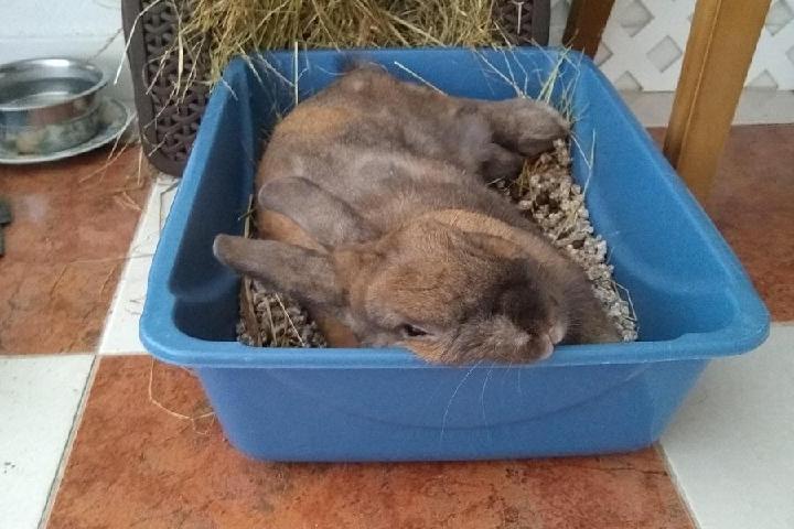El jardìn de los conejos