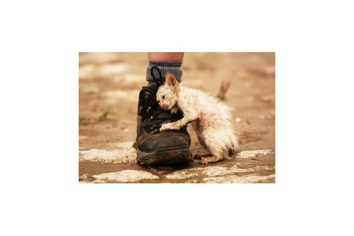 Asociación Protectora de animales CASA FELINA