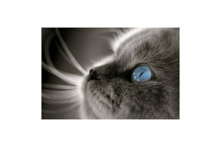 L'arche des chats