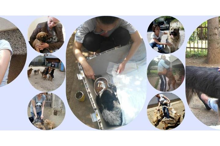 Usko's Nest Dog Shelter - Dalida - Bosnia