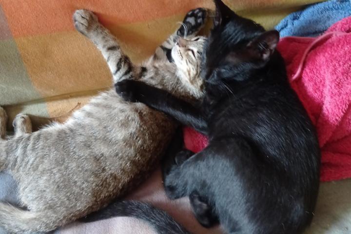 Asociación Amar como animal