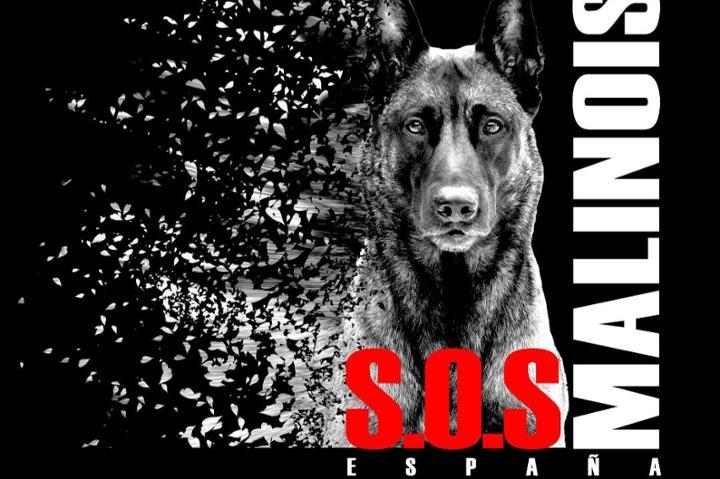 SOS MALINOIS ESPAÑA