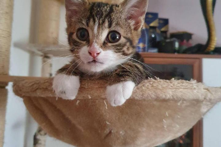 SOS Katzenhilfe e.V.