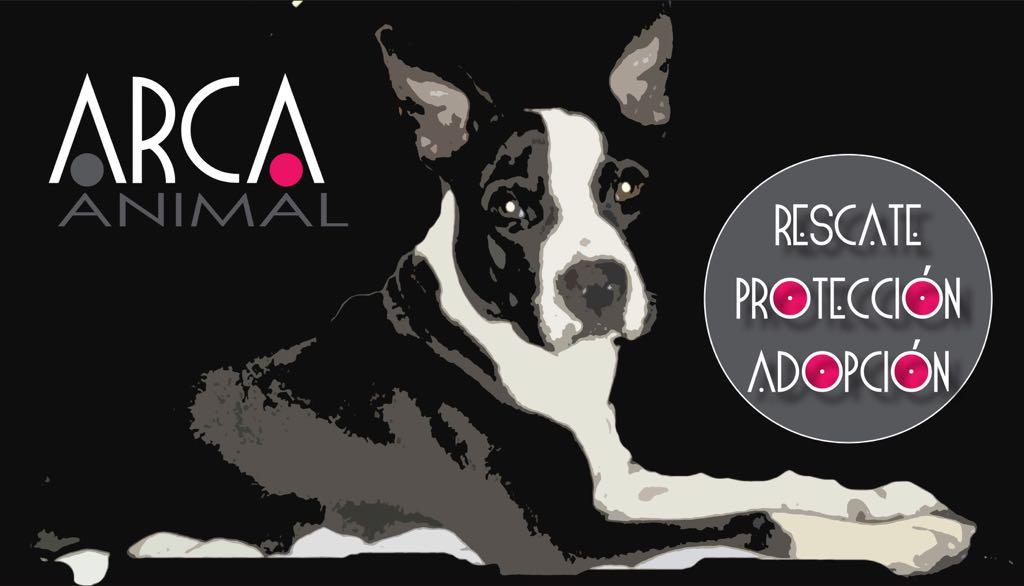 ARCA ANIMAL Rescate Protección Adopcion