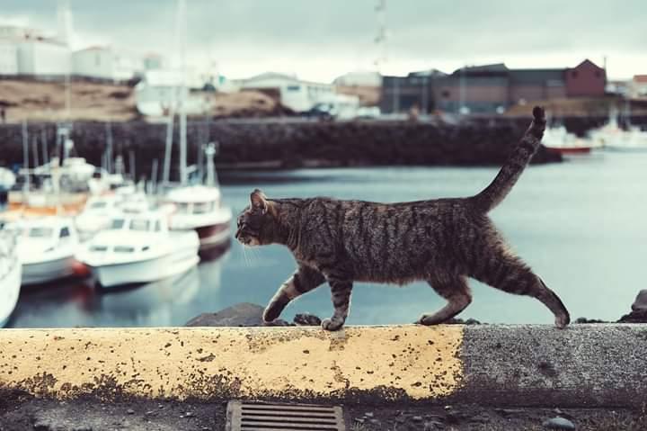 Asociación protectora de gatos Minchiños Moaña