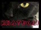 KHATUCAI, ASOCIACIÓN PROTECTORA DE ANIMALES
