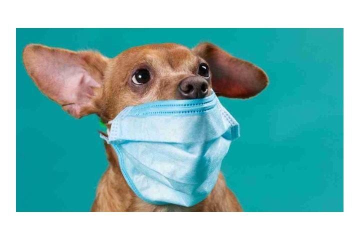 Ningún animal abandonado por el coronavirus