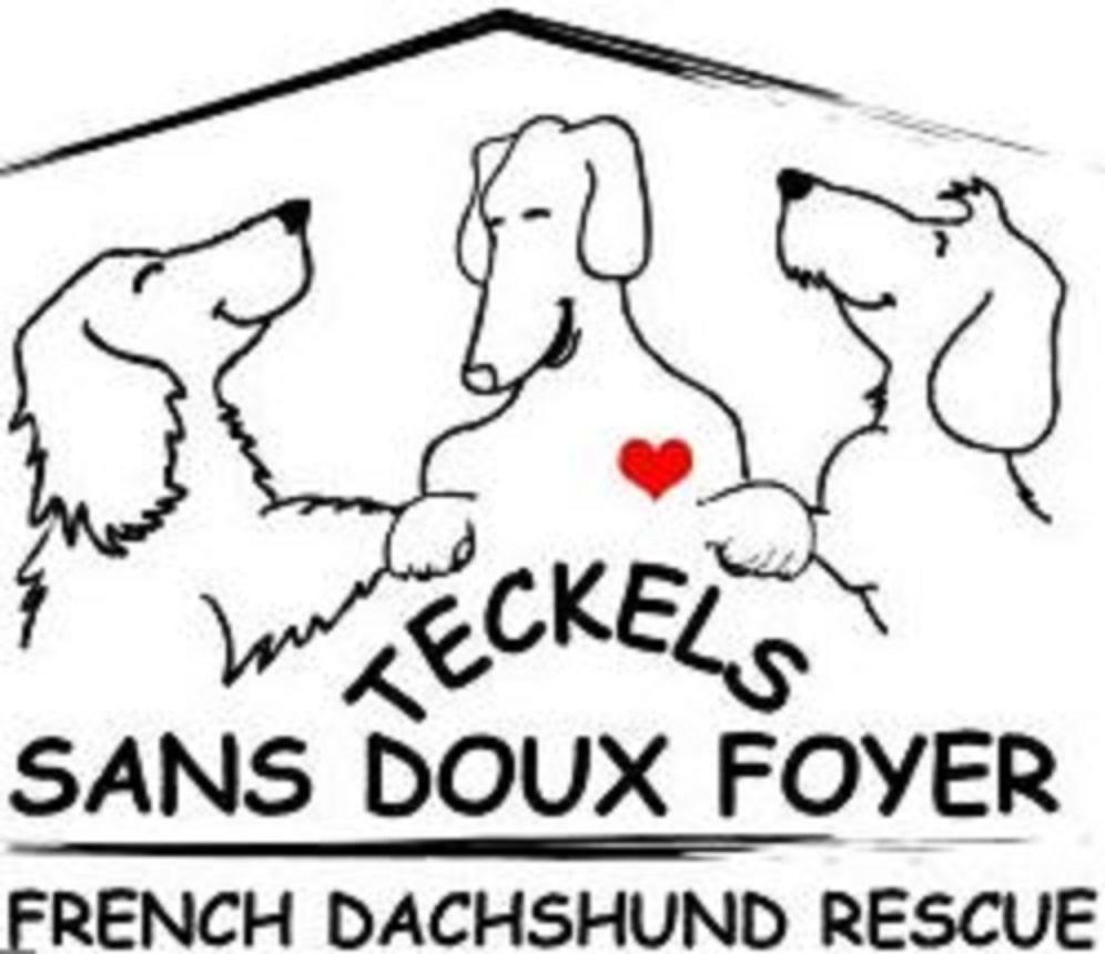 Association Teckels Sans Doux Foyer
