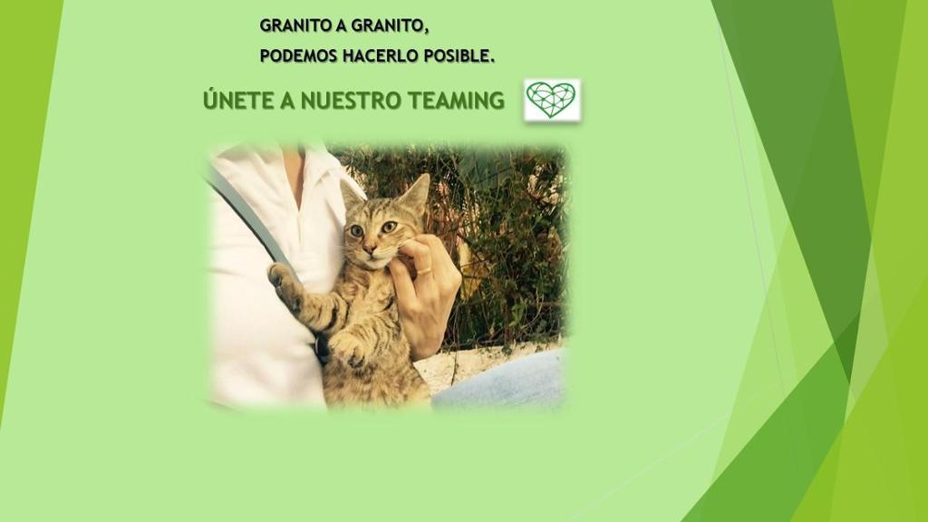 Gatos sin hogar GC